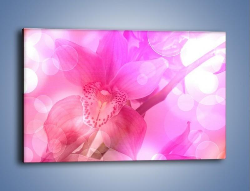 Obraz na płótnie – Budzący dzień w różowym kwiecie – jednoczęściowy prostokątny poziomy K487