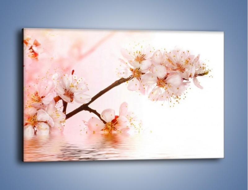 Obraz na płótnie – Blask kwiatów jabłoni – jednoczęściowy prostokątny poziomy K569