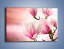 Obraz na płótnie – Magnolia o zachodzie słońca – jednoczęściowy prostokątny poziomy K595