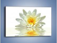 Obraz na płótnie – Biel z pomarańczą w kwiecie – jednoczęściowy prostokątny poziomy K674