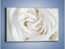 Obraz na płótnie – Biel róży za dnia – jednoczęściowy prostokątny poziomy K709