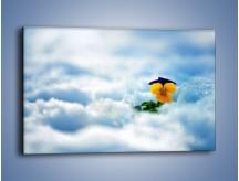 Obraz na płótnie – Bratek na śnieżnym niebie – jednoczęściowy prostokątny poziomy K744