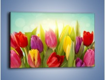Obraz na płótnie – Tulipany w pierwszym rzędzie – jednoczęściowy prostokątny poziomy K760