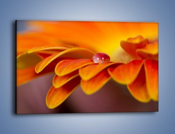 Obraz na płótnie – Kwiatowa pojedyncza łza – jednoczęściowy prostokątny poziomy K872