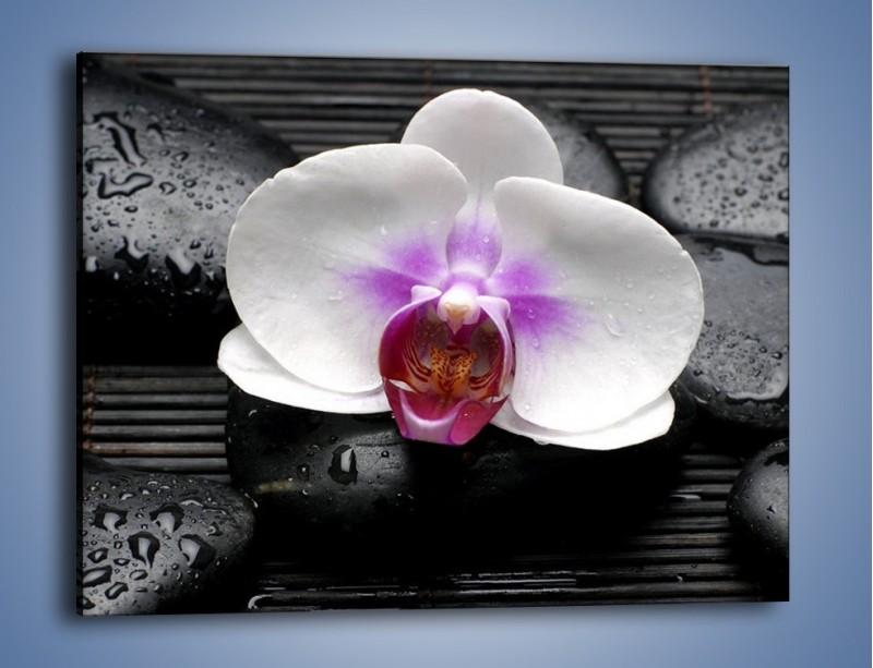 Obraz na płótnie – Biały kwiat na ciemnej macie – jednoczęściowy prostokątny poziomy K874