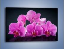 Obraz na płótnie – Różne kwiatowe warianty – jednoczęściowy prostokątny poziomy K877