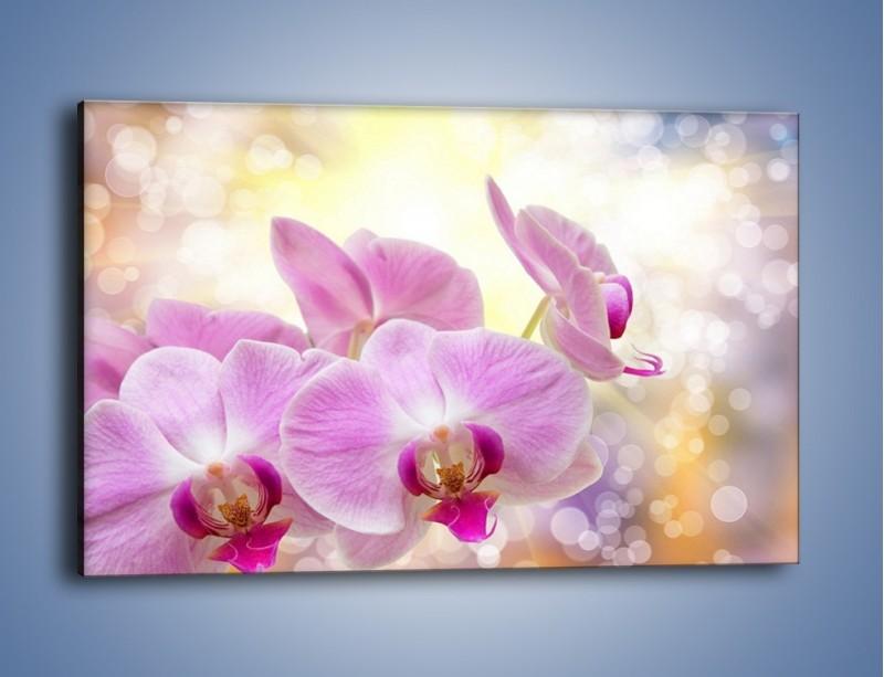 Obraz na płótnie – Lila kwiaty o poranku – jednoczęściowy prostokątny poziomy K976