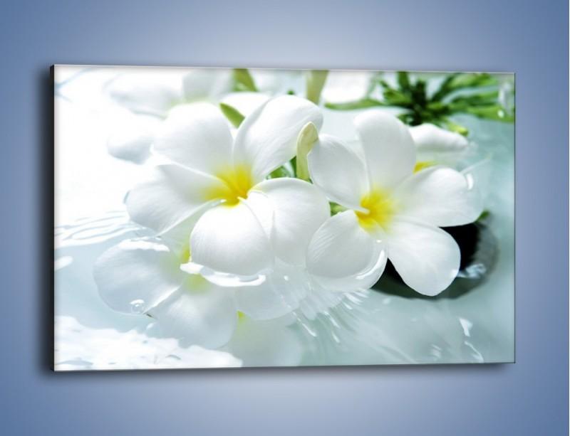 Obraz na płótnie – Białe kwiaty w potoku – jednoczęściowy prostokątny poziomy K991