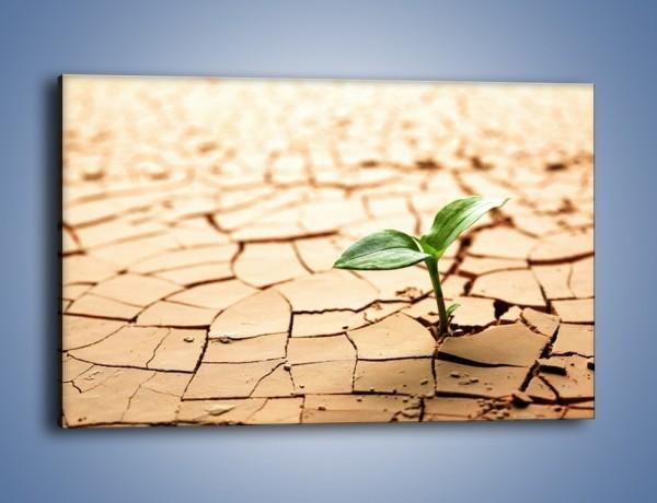 Obraz na płótnie – Łodyga w spękanej ziemi – jednoczęściowy prostokątny poziomy KN013