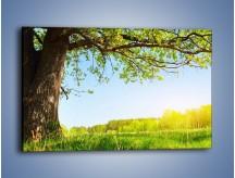 Obraz na płótnie – Drzewo na wsi – jednoczęściowy prostokątny poziomy KN024