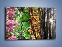 Obraz na płótnie – Drzewa w różnych kolorach – jednoczęściowy prostokątny poziomy KN037
