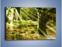 Obraz na płótnie – Las porośnięty mchem – jednoczęściowy prostokątny poziomy KN051