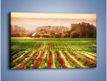 Obraz na płótnie – Urodzajne ziemie na wsi – jednoczęściowy prostokątny poziomy KN059
