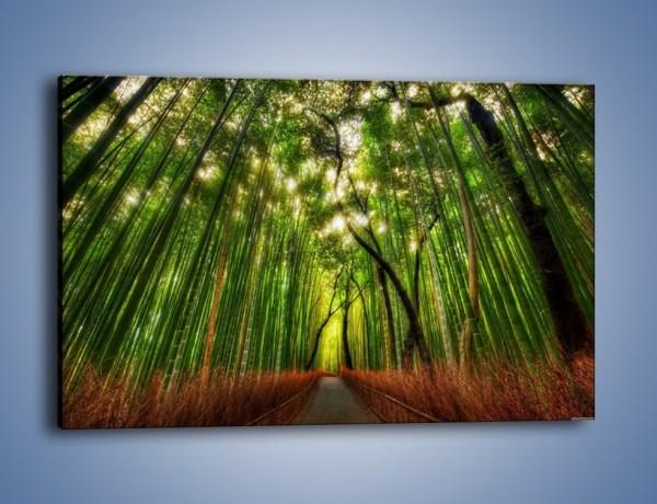 Obraz na płótnie – Przejście pomiędzy drzewami – jednoczęściowy prostokątny poziomy KN1021