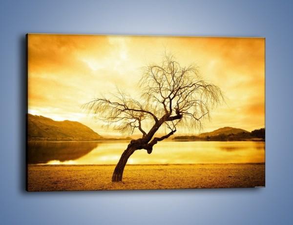 Obraz na płótnie – Pochylone drzewo w sepii – jednoczęściowy prostokątny poziomy KN1033
