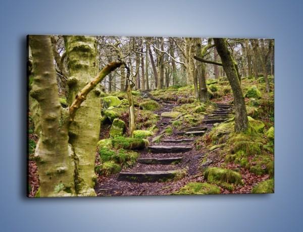 Obraz na płótnie – Schodkami przez las – jednoczęściowy prostokątny poziomy KN1054