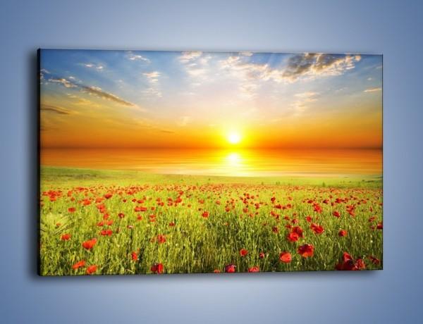 Obraz na płótnie – Maki na słońcu – jednoczęściowy prostokątny poziomy KN1071