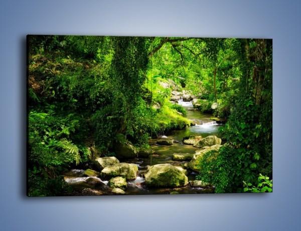 Obraz na płótnie – Nawodniona roślinność – jednoczęściowy prostokątny poziomy KN1072