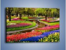 Obraz na płótnie – Aleje kolorowych tulipanów – jednoczęściowy prostokątny poziomy KN1079