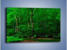 Obraz na płótnie – Mocno zarośnięty las – jednoczęściowy prostokątny poziomy KN1089A