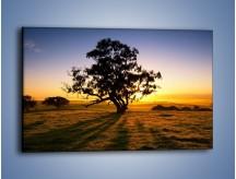 Obraz na płótnie – Drzewa w oddali – jednoczęściowy prostokątny poziomy KN1095