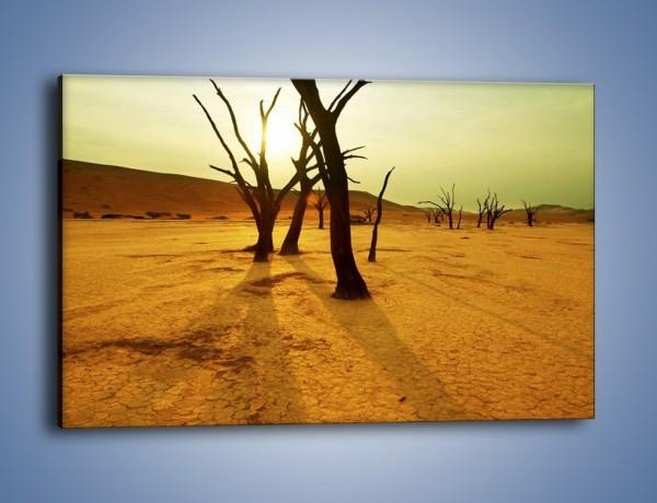 Obraz na płótnie – Drzewa bez niczego – jednoczęściowy prostokątny poziomy KN111