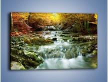 Obraz na płótnie – Wilgoć w lesie – jednoczęściowy prostokątny poziomy KN1118A