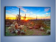 Obraz na płótnie – Rodzina kaktusów – jednoczęściowy prostokątny poziomy KN1148A