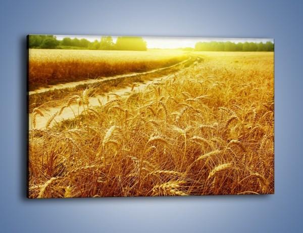 Obraz na płótnie – Pola pełne pszenicy – jednoczęściowy prostokątny poziomy KN115