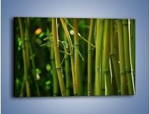 Obraz na płótnie – Bambusowe łodygi z bliska – jednoczęściowy prostokątny poziomy KN118