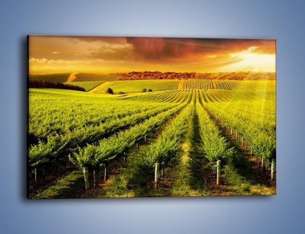 Obraz na płótnie – Plantacja w stronę słońca – jednoczęściowy prostokątny poziomy KN1180A