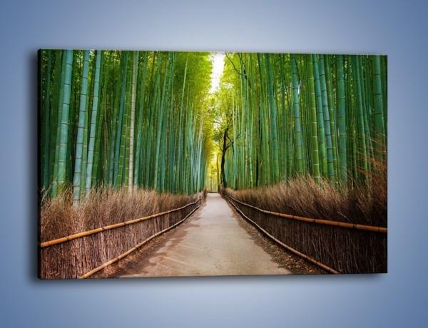Obraz na płótnie – Bambusowy las – jednoczęściowy prostokątny poziomy KN1187A