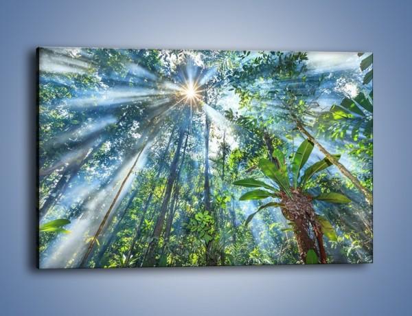Obraz na płótnie – Dyzio marzyciel i drzewa – jednoczęściowy prostokątny poziomy KN1189A