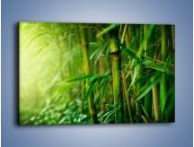 Obraz na płótnie – Bambus w roli głównej – jednoczęściowy prostokątny poziomy KN1202A