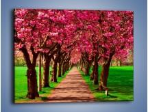 Obraz na płótnie – Aleja kwitnącej wiśni – jednoczęściowy prostokątny poziomy KN1238A