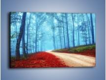 Obraz na płótnie – Rowerem przez las – jednoczęściowy prostokątny poziomy KN1245A
