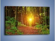 Obraz na płótnie – Polski krajobraz leśny – jednoczęściowy prostokątny poziomy KN1257A