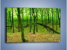 Obraz na płótnie – Wąskie spojrzenie na las – jednoczęściowy prostokątny poziomy KN1264A