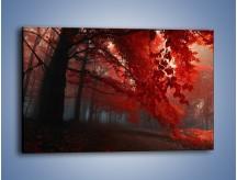 Obraz na płótnie – Smutna jesień lasu – jednoczęściowy prostokątny poziomy KN1267A
