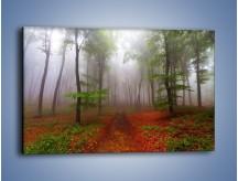 Obraz na płótnie – Budzący się lasek – jednoczęściowy prostokątny poziomy KN1285A