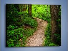 Obraz na płótnie – Wąską ścieżką leśną – jednoczęściowy prostokątny poziomy KN1296A