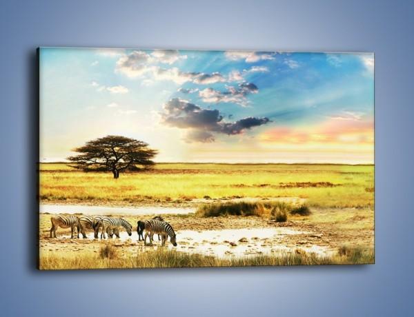 Obraz na płótnie – Zebry na sawannie – jednoczęściowy prostokątny poziomy KN1298A