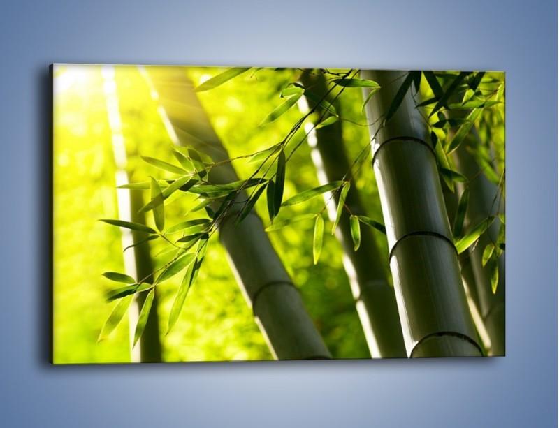 Obraz na płótnie – Twarde łodygi bambusa – jednoczęściowy prostokątny poziomy KN1314A