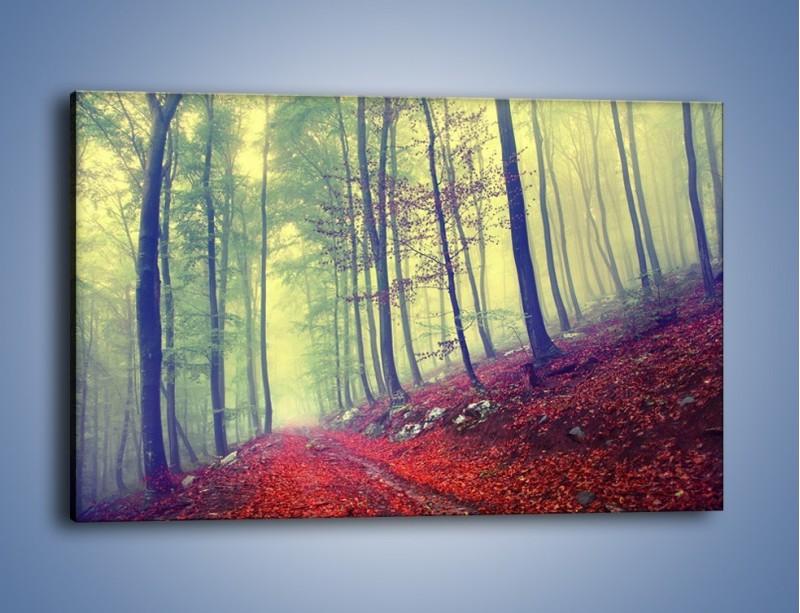 Obraz na płótnie – Bardzo wąską ścieżką leśną – jednoczęściowy prostokątny poziomy KN1335A