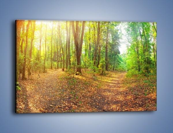 Obraz na płótnie – Przejrzysty piękny las – jednoczęściowy prostokątny poziomy KN1344A
