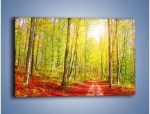 Obraz na płótnie – Brzózki liście i las – jednoczęściowy prostokątny poziomy KN1345A