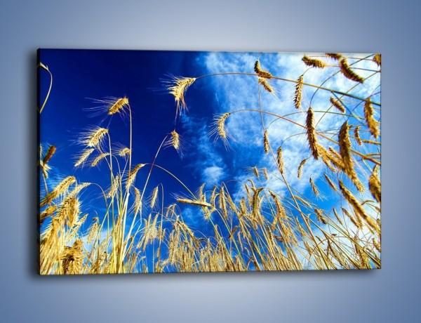 Obraz na płótnie – Zboże w niebie – jednoczęściowy prostokątny poziomy KN139