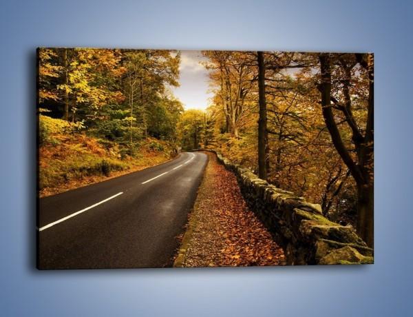 Obraz na płótnie – Asfaltową droga przez las – jednoczęściowy prostokątny poziomy KN169