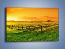 Obraz na płótnie – Pole o zachodzie słońca – jednoczęściowy prostokątny poziomy KN226