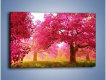 Obraz na płótnie – Sad wiśniowych drzew – jednoczęściowy prostokątny poziomy KN235